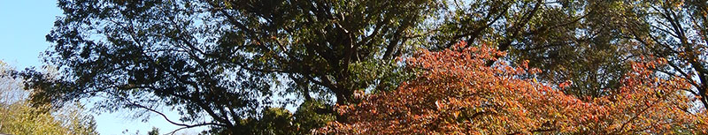 Tree Cabling, Tree Support Bucks County Montgomery County