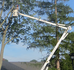 Tree Pruning Bucks County Montgomery County